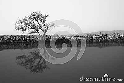 Monochrome solitude