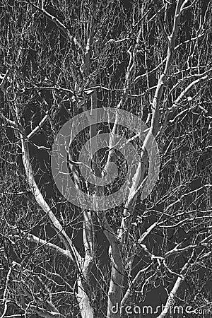 Monochrome tree branches Stock Photo