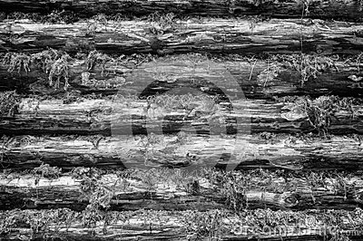 Monochrome Wall of Wood Logs