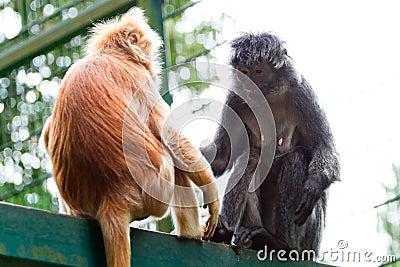 Monos en el parque zoológico