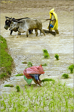 Monsoon Farming