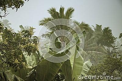 Monsoon Rains in Sri Lanka