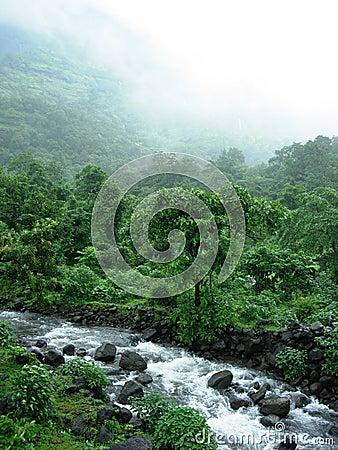 Monsoon Stream