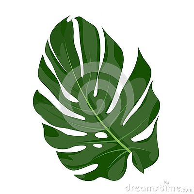 Monstera vector illustration Vector Illustration