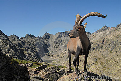 Montañas y fauna de Gredos