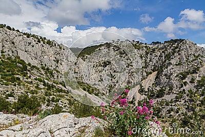 Montañas. Alpes de Provence