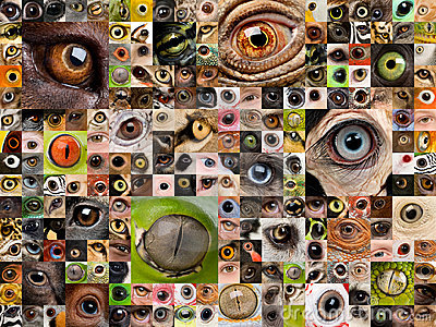 Montage of animal eyes