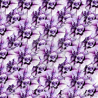 A Montage of Flowers