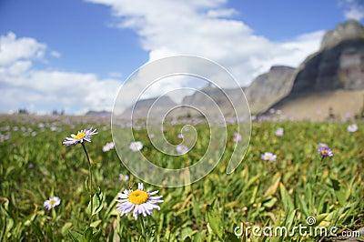 Montana Landscape II
