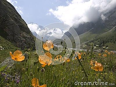 Montanhas E Flores