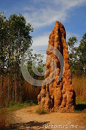 Monticule de termite
