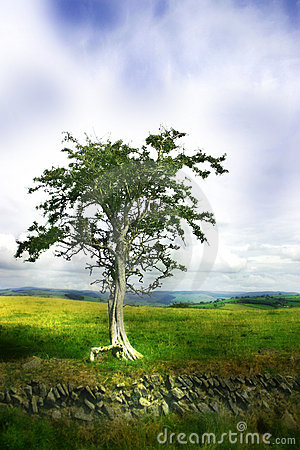 Free Moody/ Dreamy Tree Royalty Free Stock Image - 32886