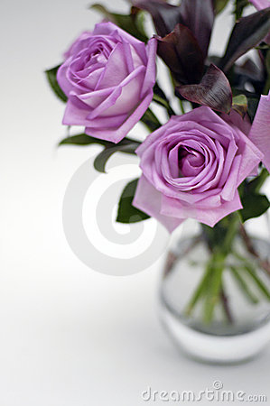 Free Moody Pink Roses 1 Royalty Free Stock Photos - 544748