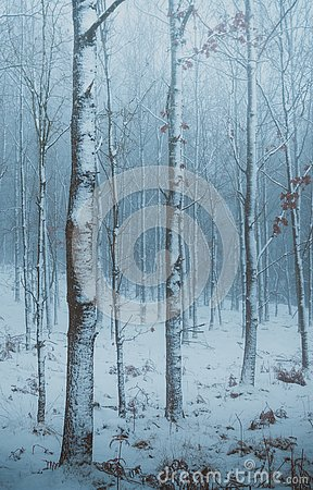 Free Moody Winter Forest In North Zealand, Denmark. Stock Photos - 141214453