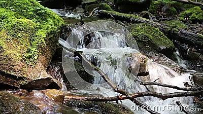 Mooie kleine beek en stenen met groen mos stock video