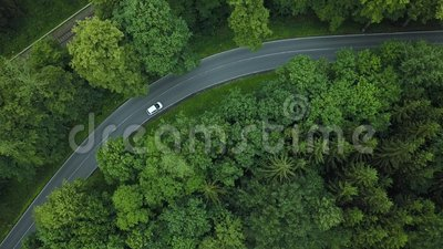 Mooie weg in bos in Duitsland stock videobeelden