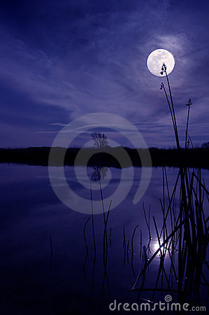 Free Moon And Reeds Royalty Free Stock Photos - 2846748