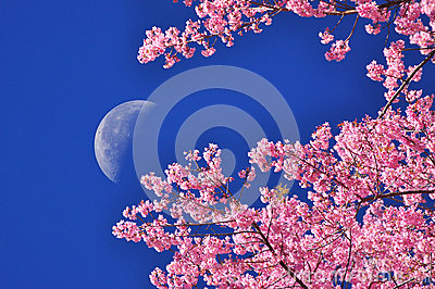 The moon on blue sky with flower foreground