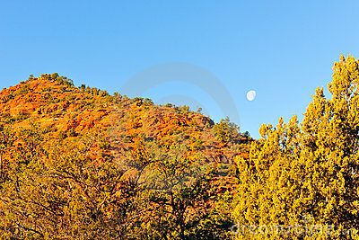 Moon over autumn trees