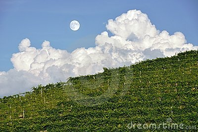 Moon over vineyard