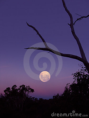 Free Moon Rise Royalty Free Stock Photography - 95117