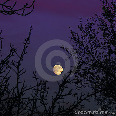 Moon rising over trees in purple sky