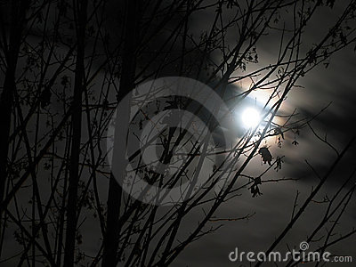 Moon shines through branches