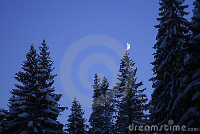 Moon on the tree