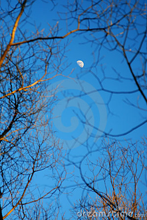 Moon among of tree