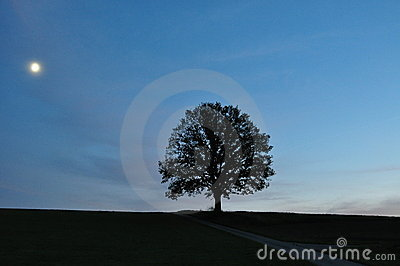 Moonlight landscape with single tree