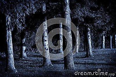 Moonlight Pines