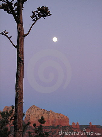 Moonlight,Red Rocks and Agave