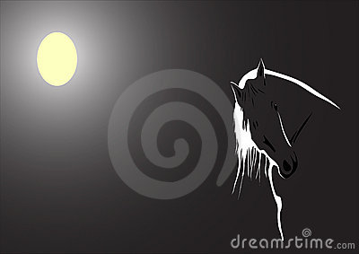 Moonlit horse on black