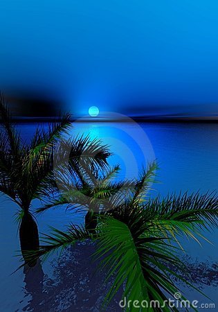 Moonlit night and palms