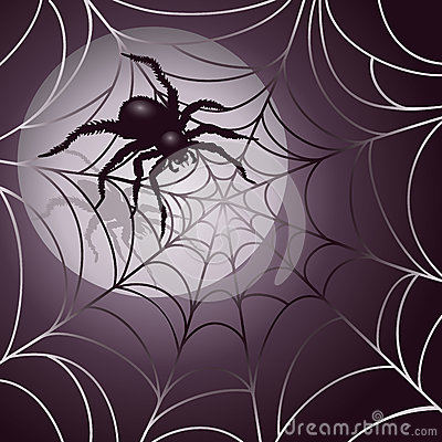 Moonlit Spider and Web