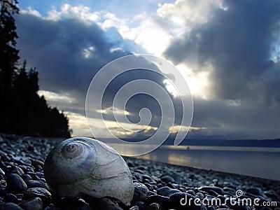 Moonshell na plaży