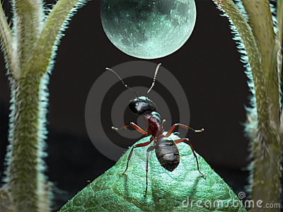 Moonwalk of ant