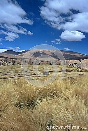 Moor on Altiplano in Bolivia,Bolivia