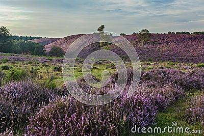 Moor in Bloom