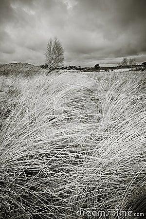Moorland landscape in b/w