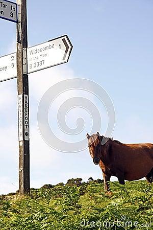 Moorland Pony Express
