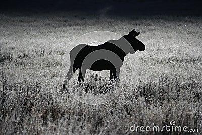 Moose Breath