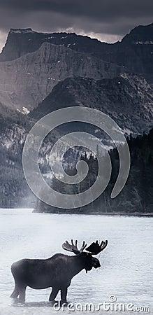Free Moose In Lake Stock Photos - 13486643