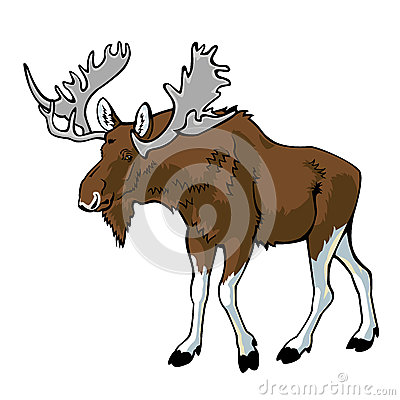 Moose isolated on white