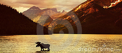 Moose in lake at sunset