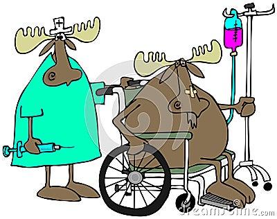 Moose patient & nurse
