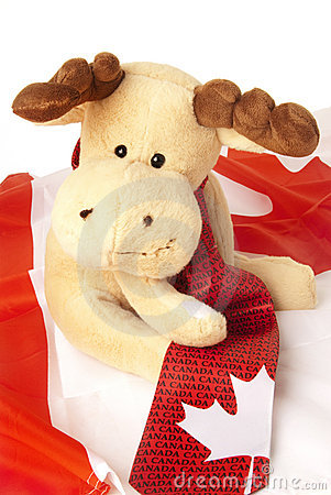 Moose seating on a Canadian flag