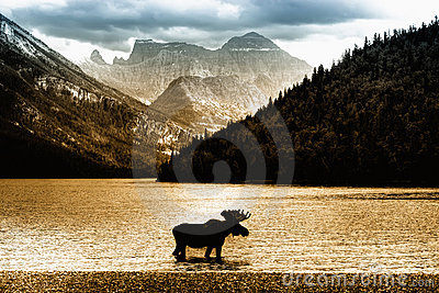 Moose in Waterton Lake