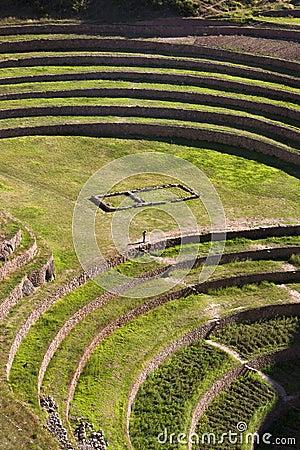 Moray Inca terraces - Urubamba - Peru