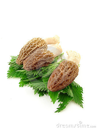 Free Morels And Nettles Royalty Free Stock Photo - 5206495